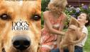 «A Dog's Purpose - Ο καλύτερος φίλος μου», Πρεμιέρα: Ιανουάριος 2017 (trailer)