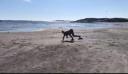 Κοπέλα από τη Νορβηγία καλπάζει σαν πραγματικό άλογο [φωτο+βίντεο]