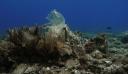 Πλαστικά «κοράλλια» – Η τρομακτική ανακάλυψη στον βυθό της Άνδρου