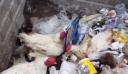 Κτηνωδία στους Αγίους Θεοδώρους: Πέταξε ζωντανές κότες στα σκουπίδια (βίντεο)