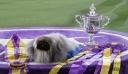 Westminster Kennel Club: Ο Γουασάμπι το πεκινουά θριάμβευσε στον διαγωνισμό σκύλων – Δείτε βίντεο