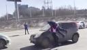 «Έπεσε» πάνω στην πιο δυνατή γυναίκα της Σιβηρίας! – Οδηγός πήγε να… [Βίντεο]