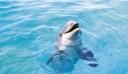 Πρωτοφανής αύξηση δελφινιών στην Αλόννησο