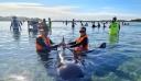 Νέα Ζηλανδία: Δεκάδες φάλαινες πιλότοι εξόκειλαν σε ακτή της χώρας