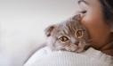 Άγνωστος πυροβολεί γάτες στα Χανιά και τις αφήνει αιμόφυρτες