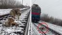 Σκύλος προστατεύει τραυματισμένη σκυλίτσα σε ράγες που περνάει τρένο από πάνω της – Την έσωσε και βγήκαν [Βίντεο]
