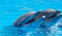 Tο πρώτο καταφύγιο απελευθέρωσης αιχμάλωτων δελφινιών ανοίγει στους Λειψούς