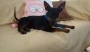 Σκυλάκι έφαγε λαγοκέφαλο στο Ρέθυμνο – Σώθηκε από θαύμα
