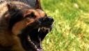Λουτράκι: Αποζημίωση 2.000 ευρώ σε γυναίκα για δάγκωμα σκύλων χωρίς λουρί