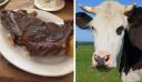 Επιστήμονες δημιούργησαν την πρώτη μοσχαρίσια μπριζόλα χωρίς να σκοτώσουν το ζώο