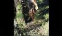 Κτηνωδία στην Αρκαδία: Κρέμασαν σκύλο από δέντρο με σύρμα (εικόνα)