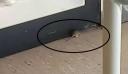Καταγγελία: Ποντίκι στην Παιδιατρική Κλινική του Πανεπιστημιακού Νοσοκομείου Ηρακλείου (εικόνα)