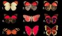 Διάλεξε μία Πεταλούδα που σας αρέσει περισσότερο και θα βρείτε την απάντηση στην επιλογή που κάνατε