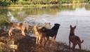 Έχει γίνει viral! Ιδιοκτήτης σκύλων κάνει φάρσα στους τετράποδους φίλους του [Βίντεο]