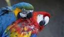 Επιστήμονες εντόπισαν το γενετικό υπόβαθρο της μονογαμίας στα ζώα