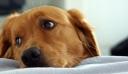 Κτηνωδία στον Βόλο: Έδεσε πέτρες σε σκύλο και τον πέταξε στη θάλασσα να πνιγεί (εικόνες)