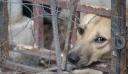 Λέσβος: Τύφλωσαν σκυλάκι και πυροβόλησαν γάτα!