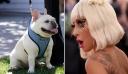 Τέλος η αγωνία για τη Lady Gaga: Τα δύο σκυλάκια της, που είχαν κλαπεί, επεστράφησαν