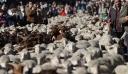 Γέμισαν με πρόβατα οι δρόμοι της Μαδρίτης – Κατευθύνονται προς τα χειμερινά τους βοσκοτόπια