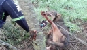 Βρήκαν τον λύκο παγιδευμένο. Προσπάθησαν να τον σώσουν, μέχρι τη στιγμή της επίθεσης… [Βίντεο]