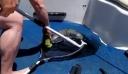 Λαγοκέφαλος πιάστηκε στα δίχτυα ψαρά στην Κρήτη
