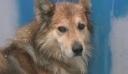 Δολοφονία Αγγελικής Πέτρου: Ο σκύλος της οδήγησε τους αστυνομικούς στο σημείο που βρέθηκε θαμμένη