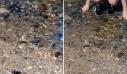 Δηλητηριώδης οχιά κολυμπά δίπλα σε παιδιά