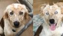"""Υιοθέτησε σκύλο για τα 25α γενέθλια της – Οι φωτογραφίες πριν και μετά """"τα λένε όλα"""" (εικόνες)"""