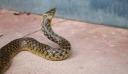 Φίδι δάγκωσε 16χρονο σε χωράφι στη Βοιωτία
