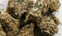 Γρεβενά: Ενάμισι χρόνο μετά βρήκαν ποιοι μετέφεραν 16 κιλά κάνναβης