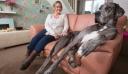 Αυτός είναι ο μεγαλύτερος σκύλος στον κόσμο (βίντεο)