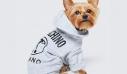 Τη συνεργασία της H&M με τον Moschino για τη σεζόν θα τη χαρείς μαζί με το κατοικίδιό σου