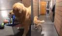 Σκύλος πιάστηκε να «κλέβει» παιχνίδια από αστυνομικό τμήμα γιατί νόμιζε πως ήταν για εκείνον