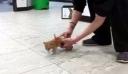 Μοναδικό! Δείτε τη συγκινητική στιγμή που παράλυτο γατάκι ανακαλύπτει ότι μπορεί να τρέξει ξανά!