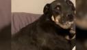 Σκύλος και αλεύρι ίσον ένας κακός συνδυασμός