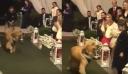 Κι όμως: Έκανε τον σκύλο του κουμπάρο στον γάμο του! (βίντεο)