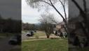 Πτώση δέντρου σηκώνει κύμα γύρης