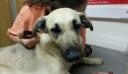 Κτηνωδία στην Κρήτη: Κρέμασαν σκυλίτσα από το λουράκι της και την άφησαν να πεθάνει