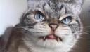 Γάτα επέστρεψε σπίτι της μετά από εξαφάνιση 13 ετών [Βίντεο]