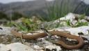 Λάρισα: Στα Επείγοντα δύο άνθρωποι από δάγκωμα φιδιών