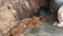 Πέταξαν ζωντανό κουτάβι σε κάδο σκουπιδιών στα Μέγαρα (εικόνες)