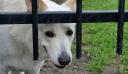 Ηλεία: Αδίστακτοι διαρρήκτες νάρκωσαν τα τέσσερα σκυλιά και άδειασαν το σπίτι