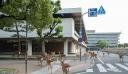 Ιαπωνία: Ελάφια κάνουν βόλτα στην πόλη, βλέπουν τις βιτρίνες και περνούν το δρόμο από τη διάβαση [φωτο+βίντεο]