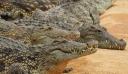 Μακελειό: Η νύχτα που οι κροκόδειλοι έφαγαν 500 με 1.000 Ιάπωνες – Η φονικότερη επίθεση κροκοδείλων στην ιστορία