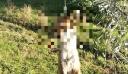 Κτηνωδία στο Αγρίνιο: Ασυνείδητος κρέμασε αλεπού από δέντρο (εικόνες)