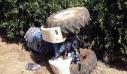 Κρήτη: Αγρότης καταπλακώθηκε από τρακτέρ στην Κίσαμο