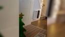 Σκύλος φοβάται φουσκωτό χριστουγεννιάτικο δέντρο [βίντεο]
