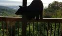 Ένας απρόσκλητος επισκέπτης στο μπαλκόνι