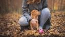 Τα 5 ζώδια που λατρεύουν τα ζώα