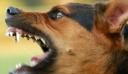 Μεσσήνη: Σκύλος επιτέθηκε σε 7χρονο – Τον δάγκωσε στον λαιμό